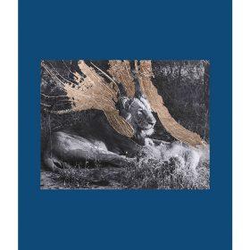Photographie - Benjamin DEROCHE - feuille d'or - éclats - noir et blanc - lion